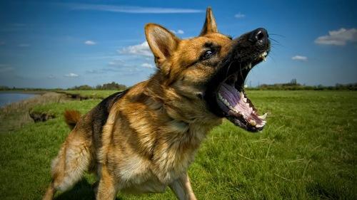 Uploads 2f1562918320748 yda49x6li9h 50f623a35495603b668d8c435871193e 2fdog barking